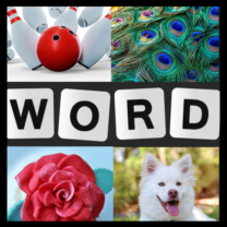 Word Picture IQ Word Brain Games Free for Adults  1.5.1